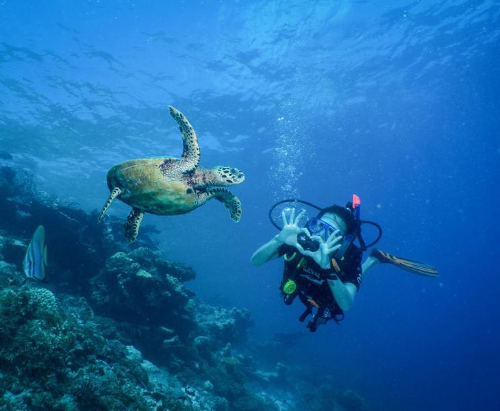 MSD Underwater Wildlife Diver